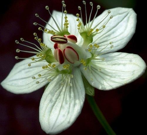 Nadir bulunan çiçekler 8