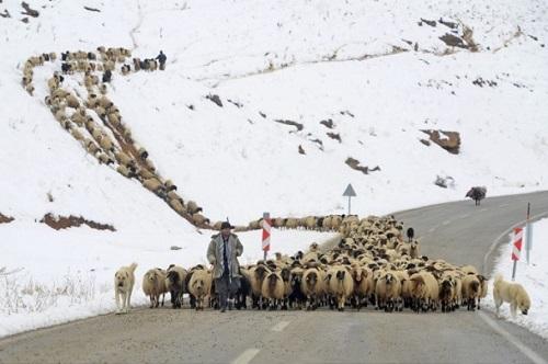 Yaylacıların karlı yollarda dönüş çilesi 1