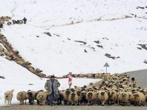 Yaylacıların karlı yollarda dönüş çilesi