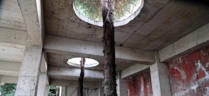 Ladin ağaçlarına Karadeniz usulü koruma 1