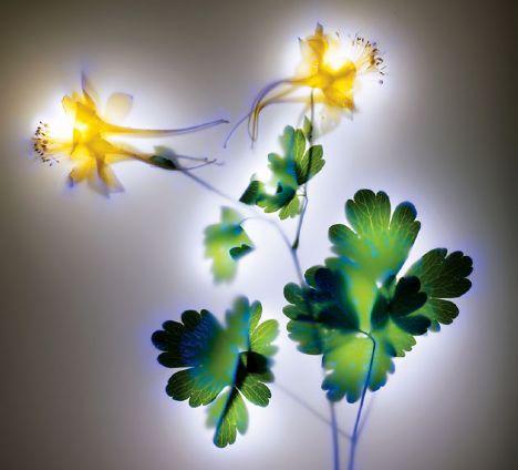Bitkilerin elektroşoklu halleri 1