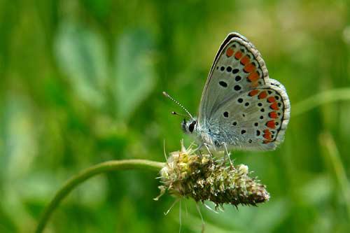 Sanatlı Kelebekler 1