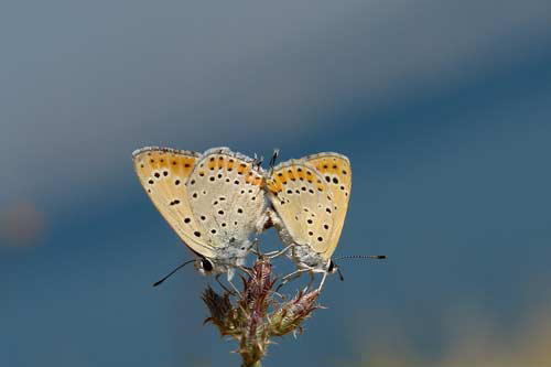 Sanatlı Kelebekler 5