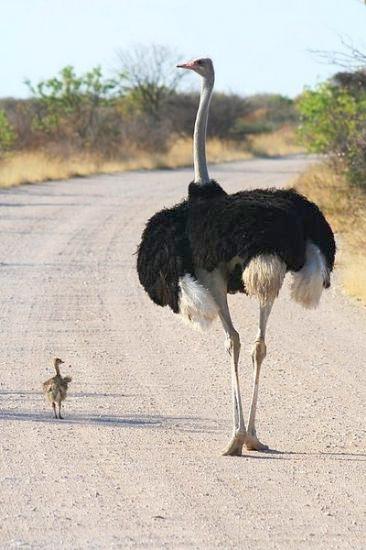 Hayvanların Sevimli Halleri 1