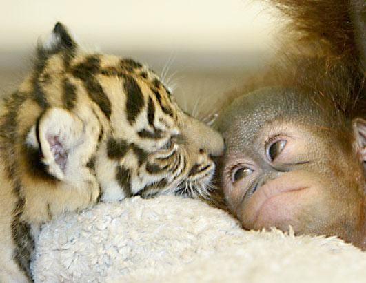 Hayvanların Sevimli Halleri 3