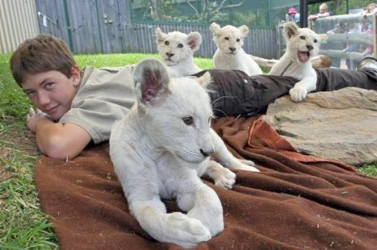 Hayvanların Sevimli Halleri 5