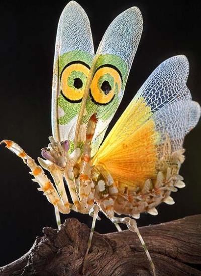 Nakış nakış işlenmiş böcekler 10