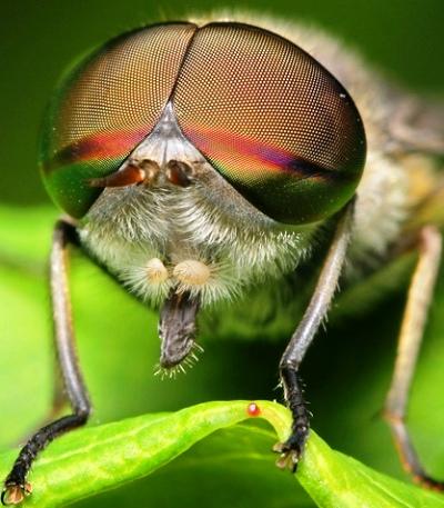 Nakış nakış işlenmiş böcekler 11
