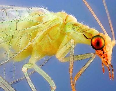 Nakış nakış işlenmiş böcekler 14