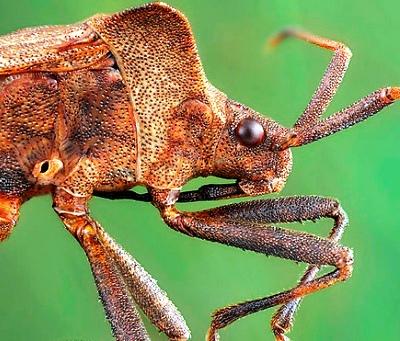 Nakış nakış işlenmiş böcekler 15