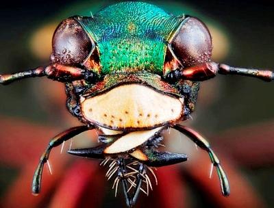 Nakış nakış işlenmiş böcekler 16