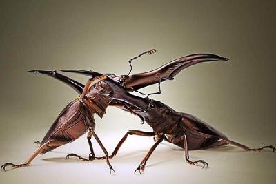 Nakış nakış işlenmiş böcekler 20