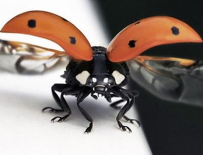 Nakış nakış işlenmiş böcekler 21