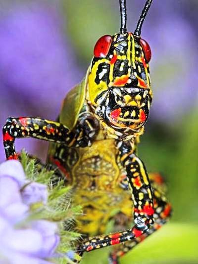 Nakış nakış işlenmiş böcekler 27