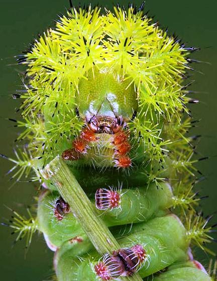 Nakış nakış işlenmiş böcekler 30