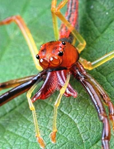 Nakış nakış işlenmiş böcekler 4