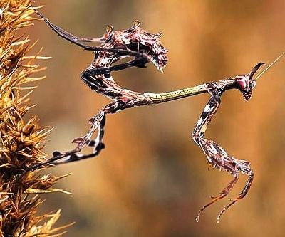 Nakış nakış işlenmiş böcekler 5