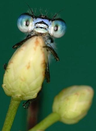 Nakış nakış işlenmiş böcekler 6