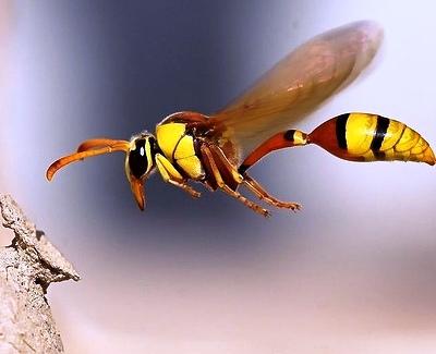Nakış nakış işlenmiş böcekler 7
