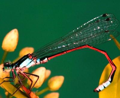Nakış nakış işlenmiş böcekler 9