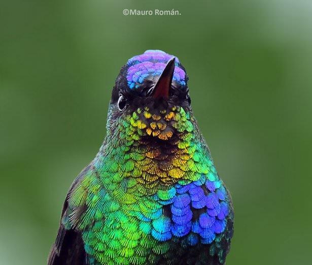 Rengarenk Tefekkürlük Görüntüleriyle Sinekkuşu 1