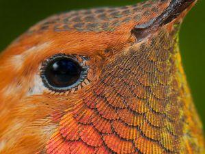 Rengarenk Tefekkürlük Görüntüleriyle Sinekkuşu