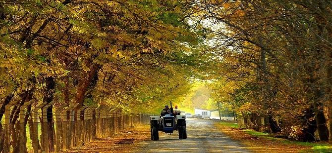Uşak'ta sonbahar güzelliği 1