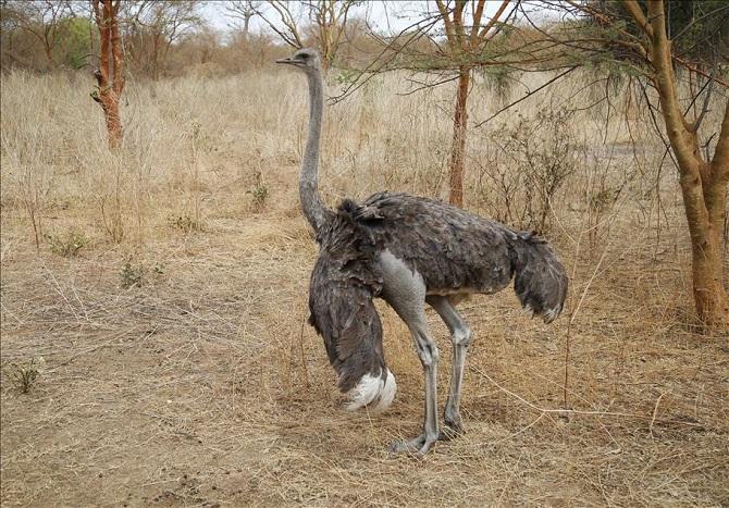 Senegal vahşi yaşam meraklılarını bekliyor 1