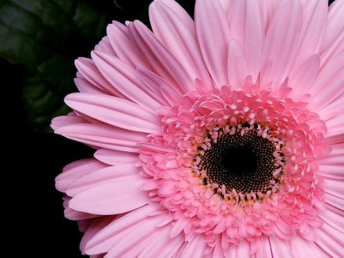 Tefekkürlük Çiçekler 10
