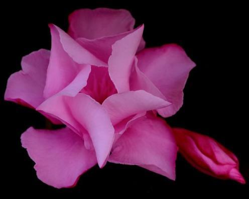Tefekkürlük Çiçekler 12