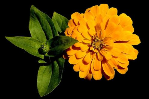 Tefekkürlük Çiçekler 16