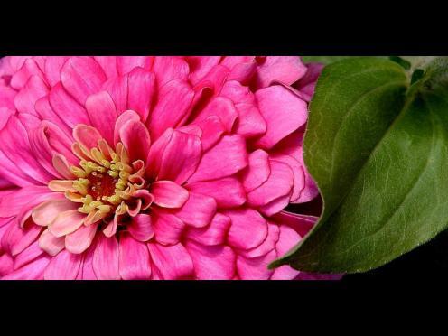 Tefekkürlük Çiçekler 17