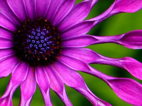 Tefekkürlük Çiçekler 2