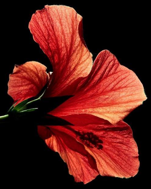 Tefekkürlük Çiçekler 3