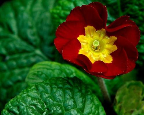 Tefekkürlük Çiçekler 5