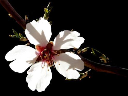Tefekkürlük Çiçekler 6
