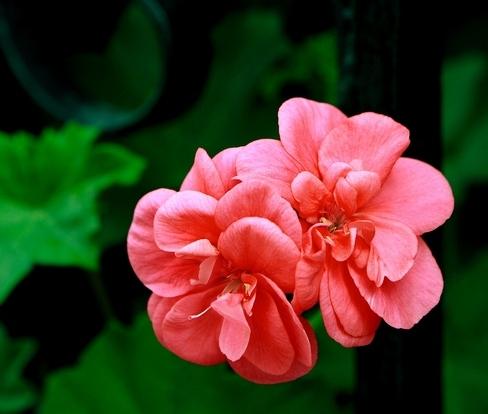 Tefekkürlük Çiçekler 7