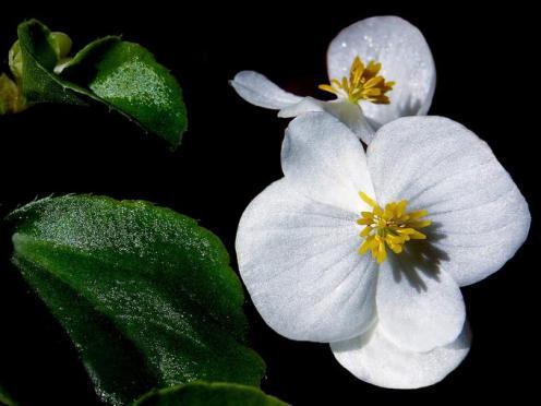 Tefekkürlük Çiçekler 9