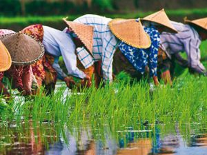 Vietnam ve Tayland'da Risale-i Nur sevinci