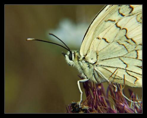 Sanatlı Kelebekler 10