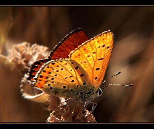 Sanatlı Kelebekler 11