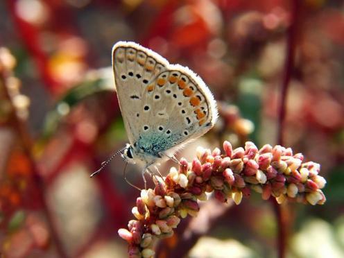 Sanatlı Kelebekler 14