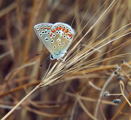 Sanatlı Kelebekler 15