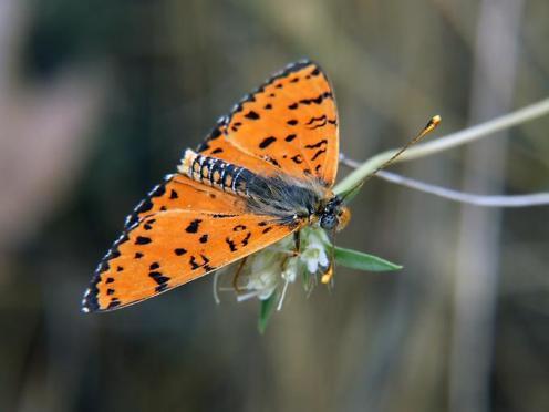 Sanatlı Kelebekler 19
