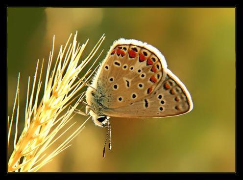 Sanatlı Kelebekler 2