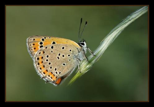 Sanatlı Kelebekler 20