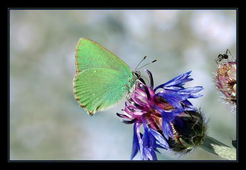Sanatlı Kelebekler 22