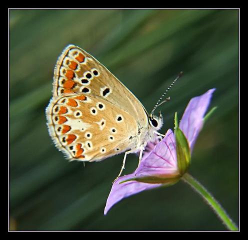 Sanatlı Kelebekler 6
