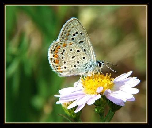 Sanatlı Kelebekler 7