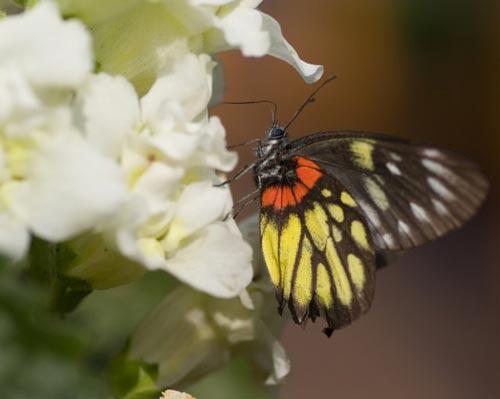 Arılar-Çiçekler 1